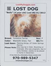 Missing 5lb Female Yorkie