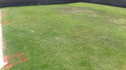 FREE 1000 SQ Ft of Grass Sod